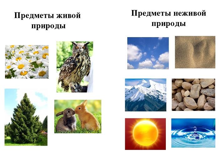 живая природа картинки детям нужно знать