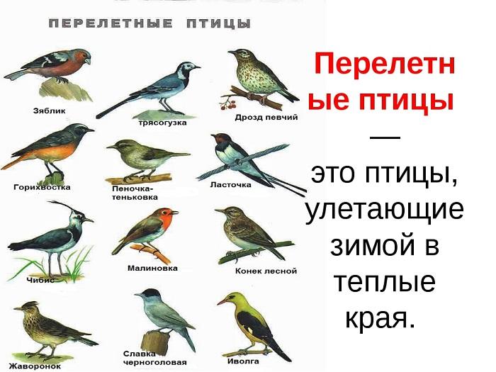 бесплатные перелетные птицы казахстана с картинками команда профессионалов, готовых