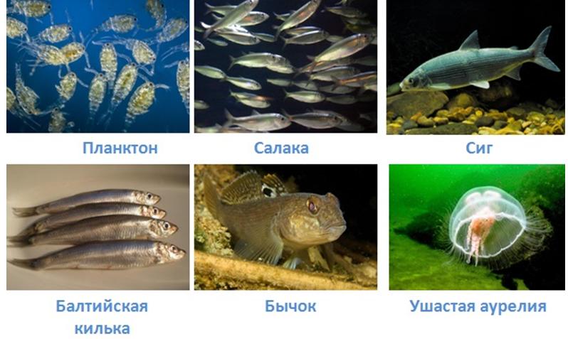 17 vodnye obekty rossii