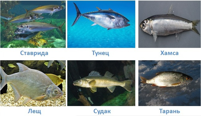 18 vodnye obekty rossii
