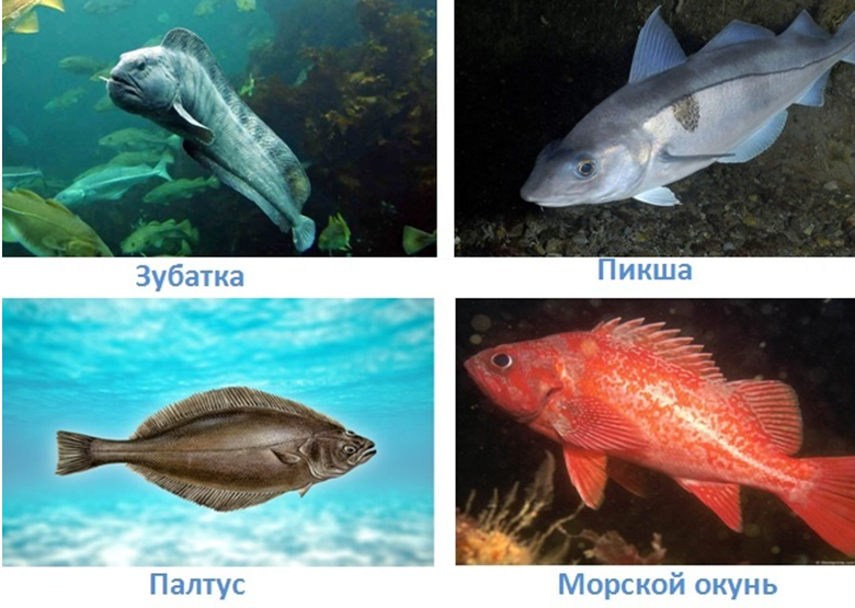 5 vodnye obekty rossii