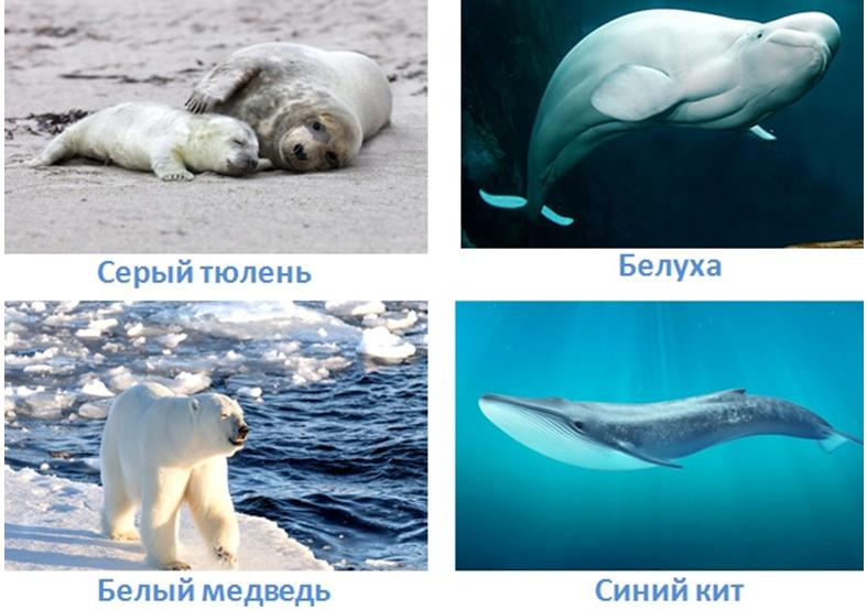 6 vodnye obekty rossii