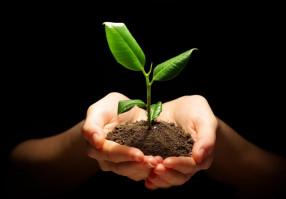 Урок 5: Размножение растений