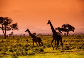 Урок 10: Африка
