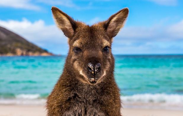 Урок 11: Австралия и Океания