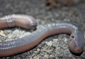 Урок 7: Кольчатые черви