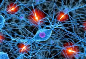 Урок 5: Нервная система