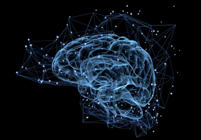 Урок 6: Головной мозг