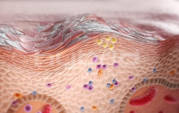 Урок 3: Ткани организма