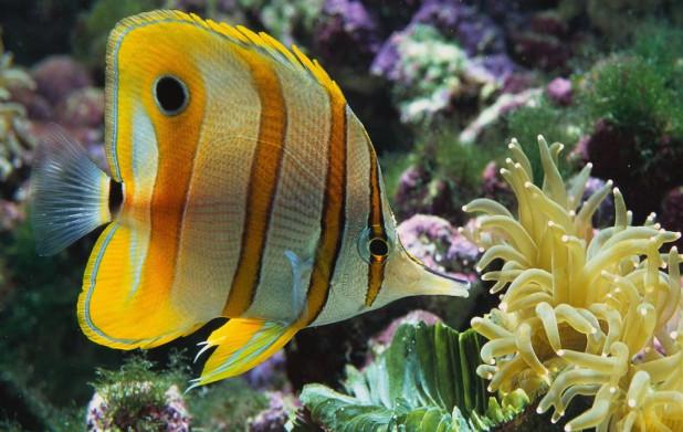 Урок 12: Круглоротые и рыбы