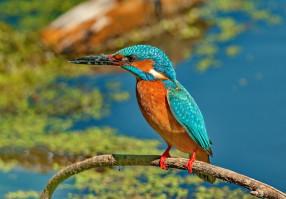 Урок 15: Птицы