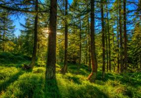 Урок 3: Лес и его обитатели
