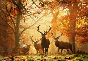 Урок 19: Экология животных