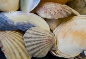 Урок 8: Моллюски
