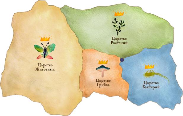 Урок 2: Систематика органического мира