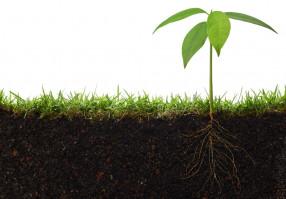 Урок 7: Экология растений