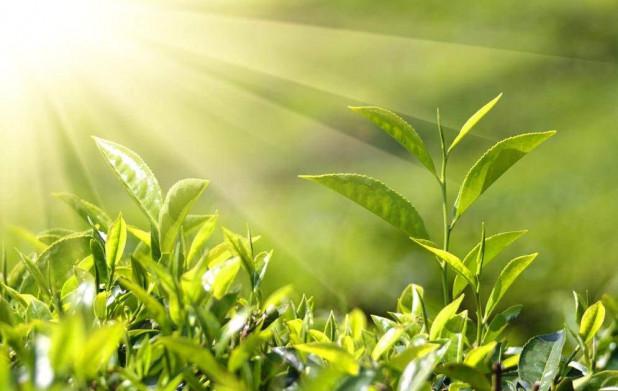 Урок 9: Формы жизни высших растений