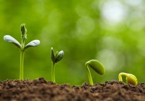 Урок 4: Жизнь растений. Часть 2