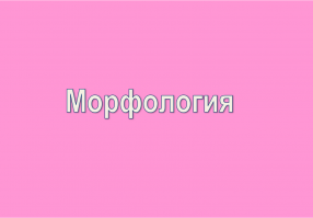 Урок 7: Морфология