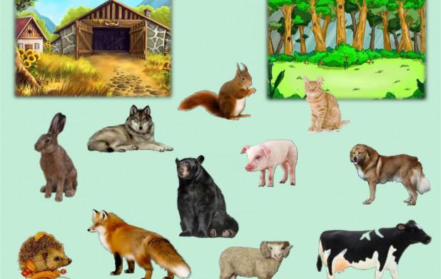 Урок 4: Животные. Часть 1
