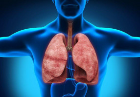 Урок 18: Строение системы дыхания