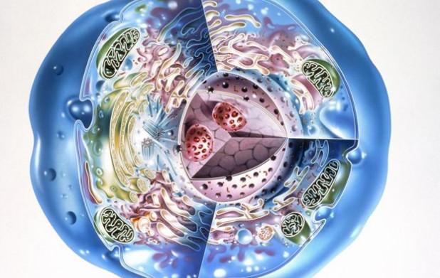 Урок 6: Строение клетки