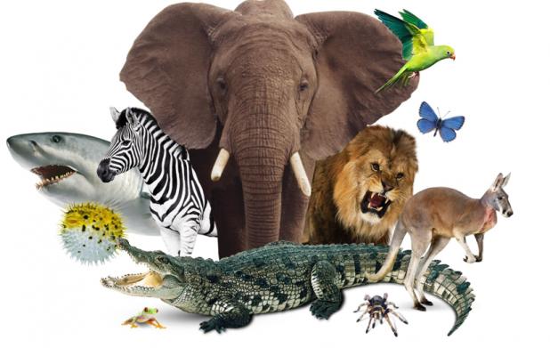 Урок 5: Животные всего света