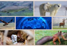 Урок 7: Животный мир России